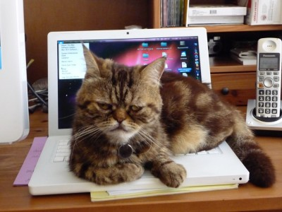 rumi on the macbook